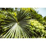 distilled water for tropical plants